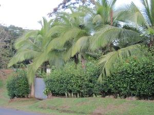 February 2014 - Costa Rica 155
